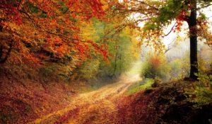 otoño en www.ComprarCarpa.es